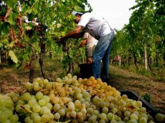 vino-tiros-di-siddura-premiato-in-israele