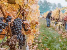 Tour del vino in Sardegna al tempo del Covid | 5 esempi virtuosi